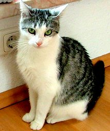 Minka Katzentweets